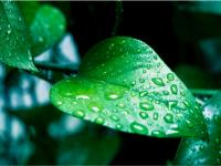 gws-green